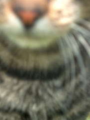 tatoo le chat