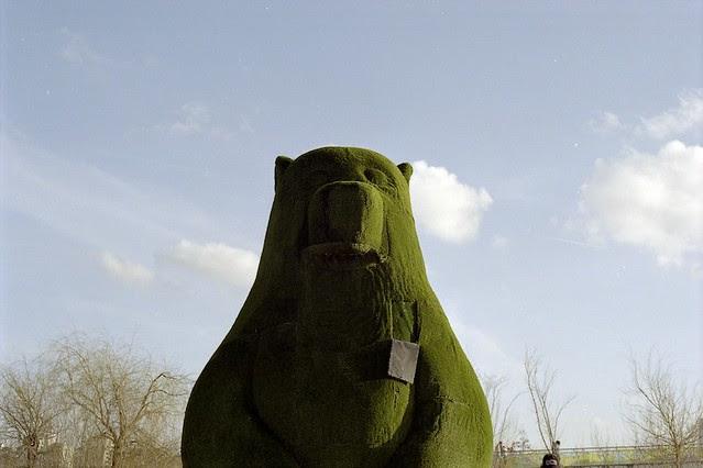 ripped bear