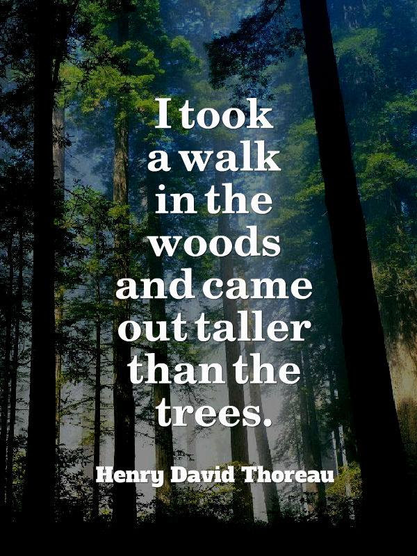 I Took A Walk In The Woods Thoreau Live By Quotes