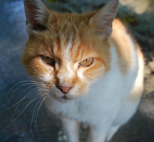 Watsons Farm kitty 1