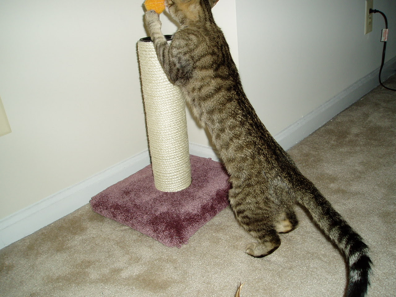 Ashley on the scratching post