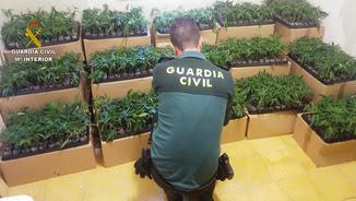 Un agent de la Guàrdia Civil, d'esquena, davant de centenars d'esqueixos de marihuana interceptats a l'interior d'una furgoneta a l'Aldea