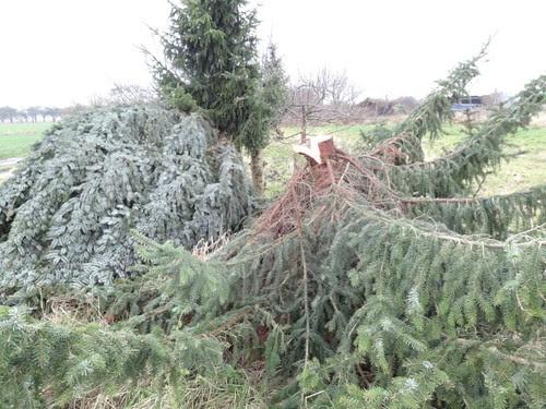 Die Rest des Weihnachtsbaums