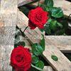 http://i757.photobucket.com/albums/xx217/carllton_grapix/5-52.jpg
