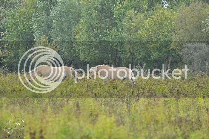 photo 15-10-2013StaatsbosbeheerZuid-Holland106-border.jpg