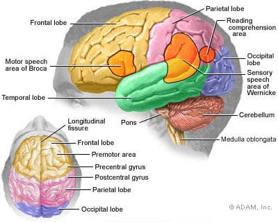 herniation of brain. Brain tumors are composed