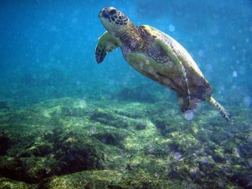 População marinha reduzida a metade desde 1970