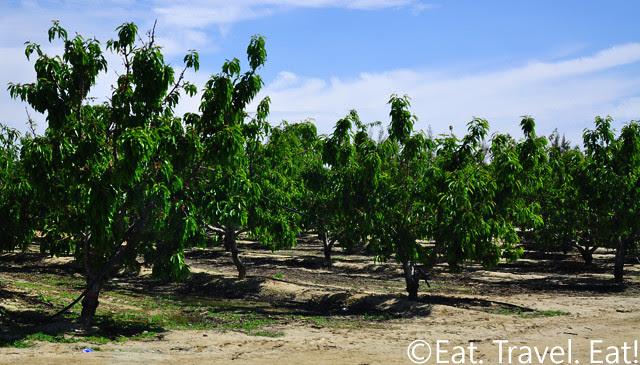 Murray Family Farms Trees