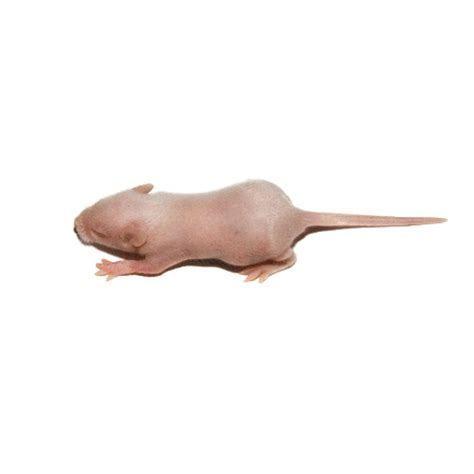 Frozen Fuzzies Mice   Frozen Mice   For Sale