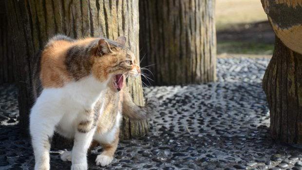 Cómo recuperar a tu gato perdido en la ciudad o en el campo