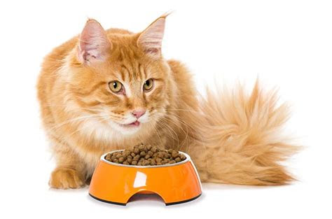 top   cat food  sensitive stomach
