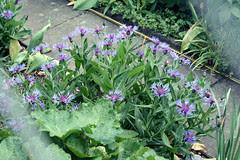 basel garden 007
