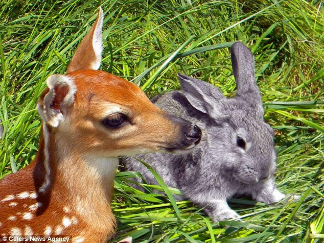 Fur-m friends: The real-life Bambi and Thumper are inseparable