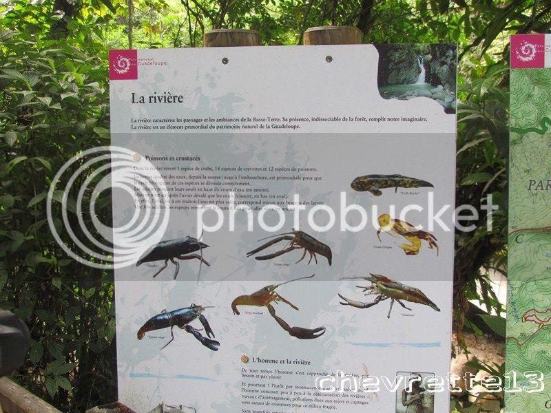 http://i1252.photobucket.com/albums/hh578/chevrette13/Guadeloupe/IMG_3835Copier_zps17ec12d2.jpg
