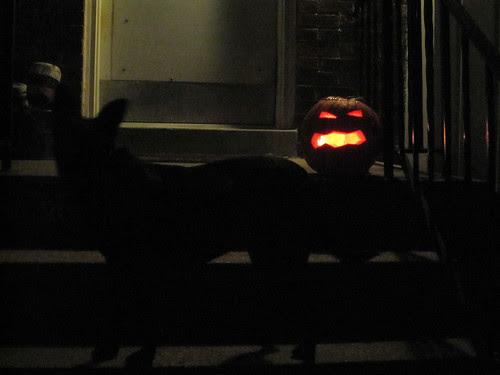 Dog and Jack o' Lantern