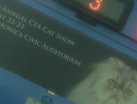cat_bus