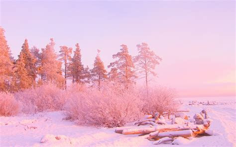 nature winter landscapes trees snow sunrises sunsets
