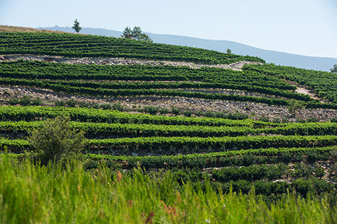 Kerem Ben Zimra Vineyard, Binyamina Winery wines