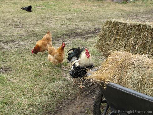 Hay inspectors 4 - FarmgirlFare.com