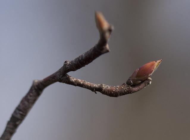 tiny new leaf