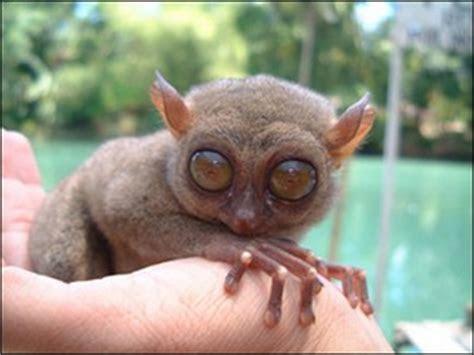 Contes pour enfants le tarsier : un drôle de petit animal dans la jungle sauvage à lire   fr