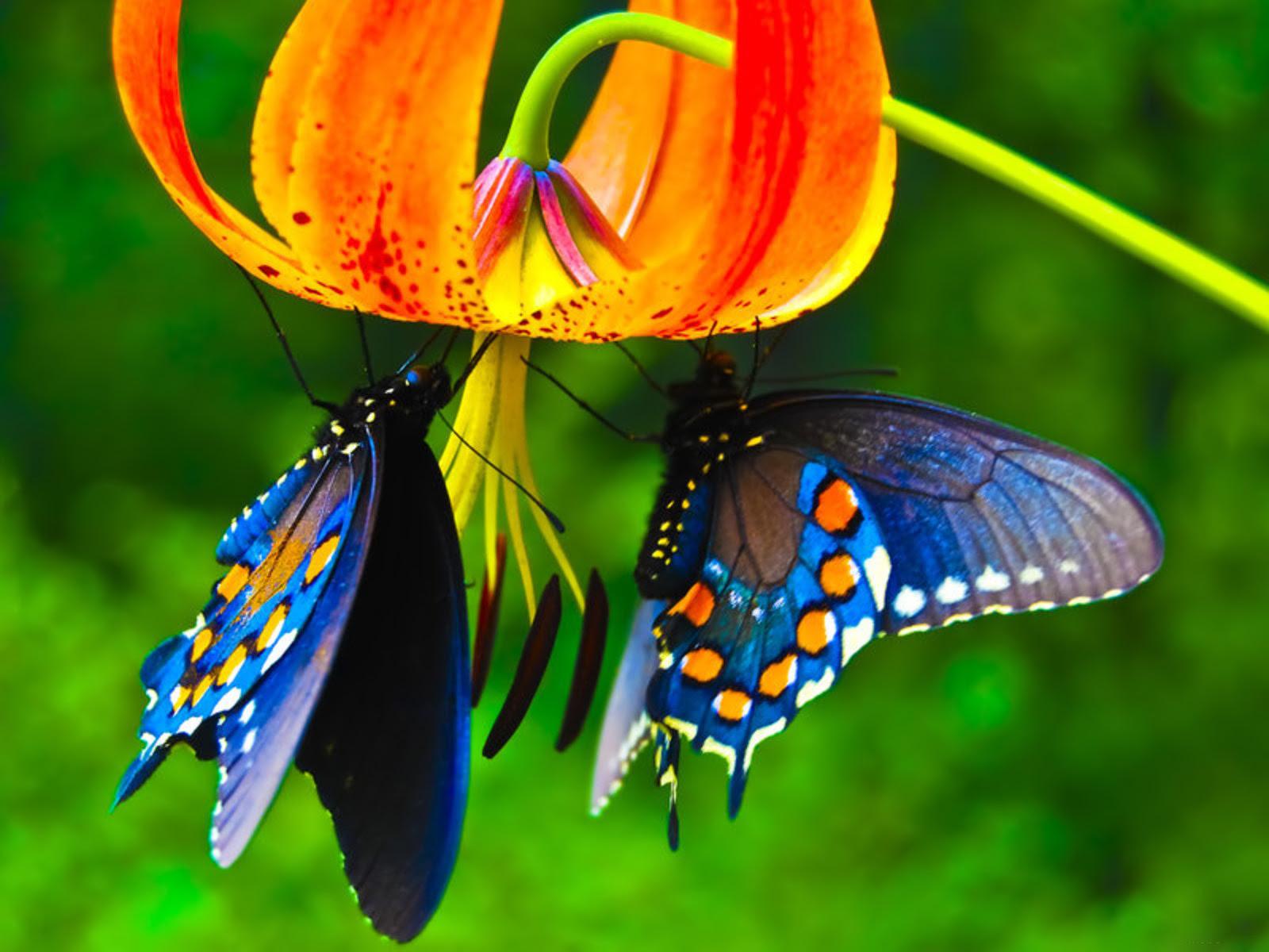 HD Butterfly Wallpapers, Butterflies Hd Wallpaper, #26861