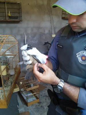 Pássaros apreendidos em Marília serão readaptados à natureza (Foto: Polícia Ambiental/Divulgação)