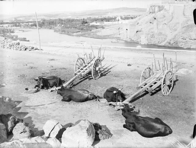 Bueyes descansan frente al Puente de San Martín en los años 20. Detalle de una Fotografía de Otto Wünderlich. © Fototeca del Patrimonio Histórico