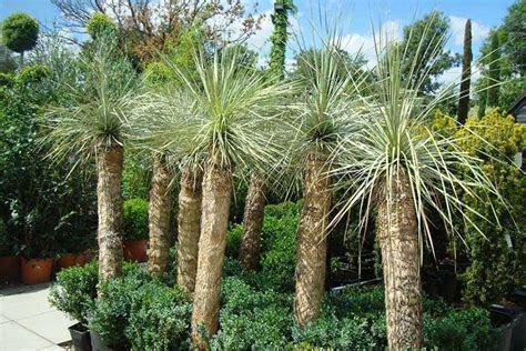 Garden Design Portfolio of Paramount Plants & Gardens