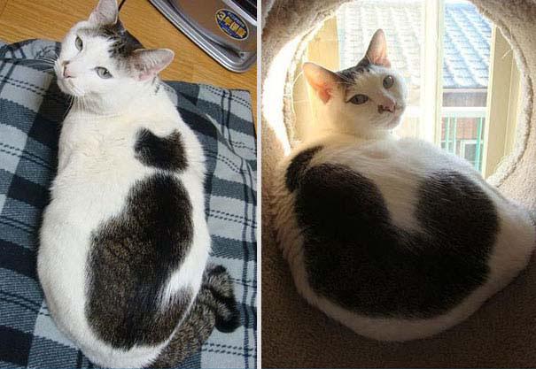Γάτες που έγιναν διάσημες χάρη στα σημάδια της γούνας τους (11)