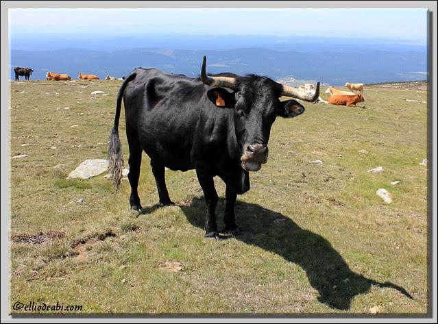 Picos de Urbión 34