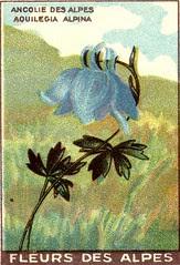 fleurs alpes 9