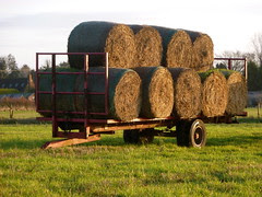 Trailer with bails of Hay