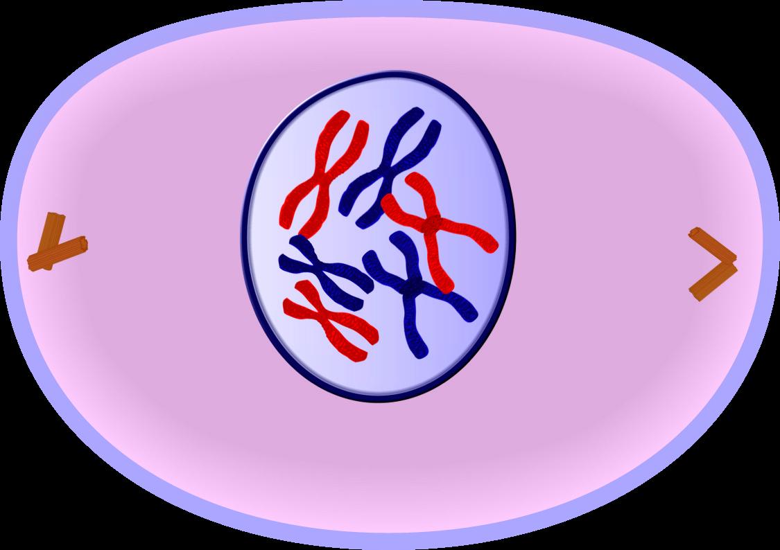 IB Biology: 九月 2013