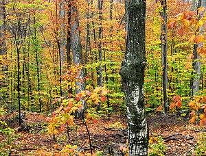 Fall near Tahquamenon Falls, Michigan