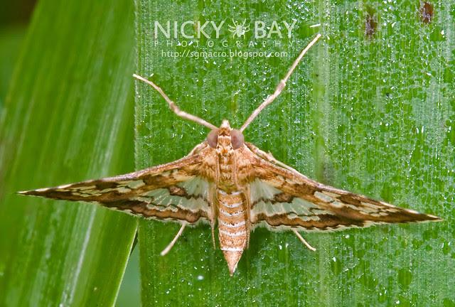 Moth - DSC_9676