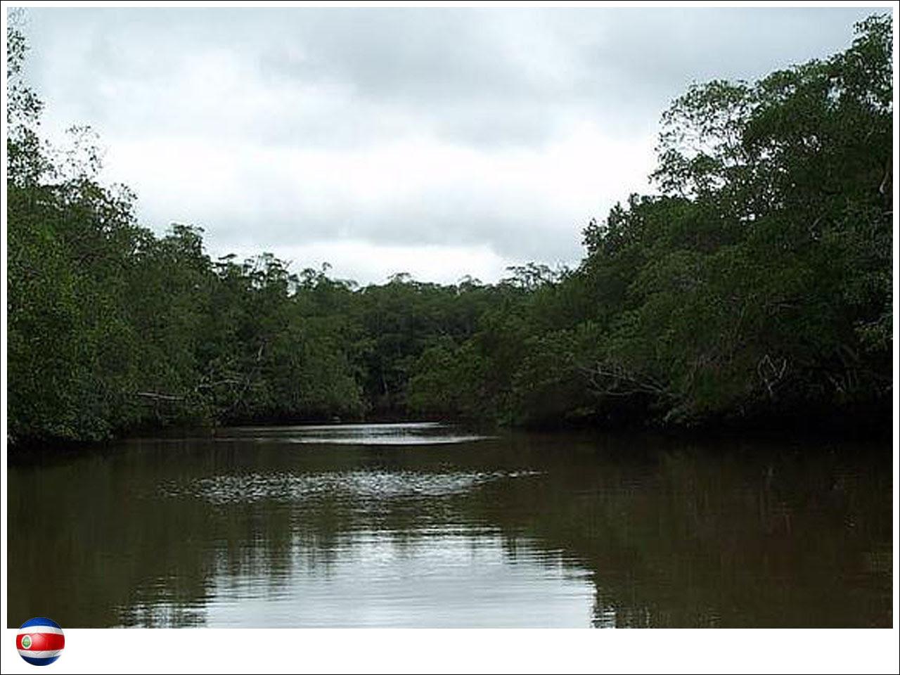 copa-protegida-costa-rica-03