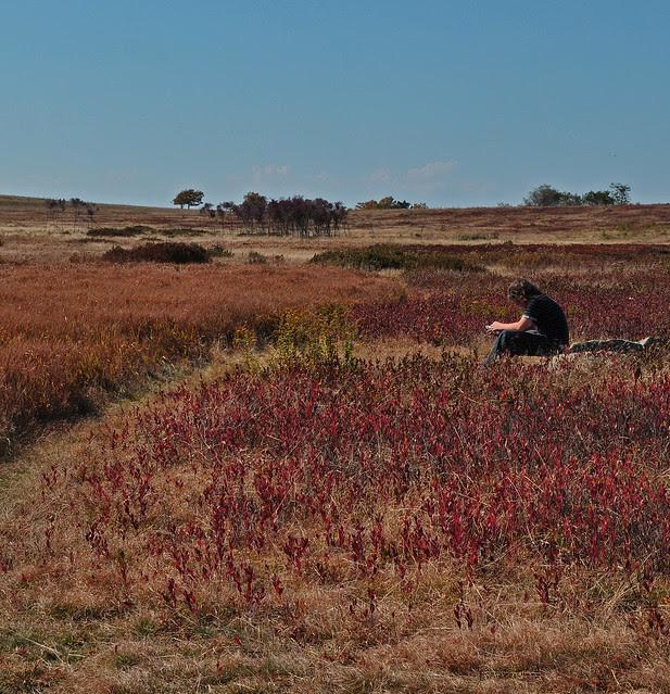 Big Meadows (6)