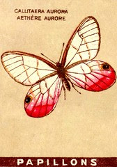 papill 6