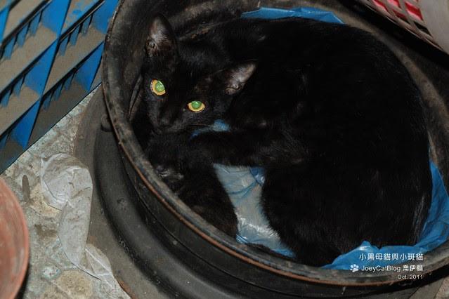2012_0618_小黑母貓與小斑貓DSC_2306