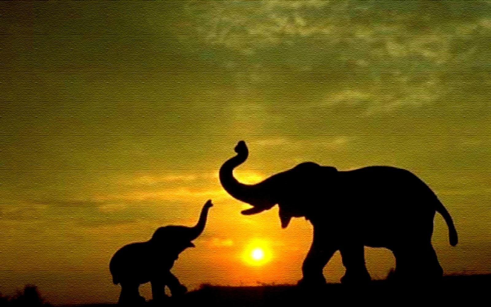 Elephant Desktop Wallpaper Wallpapers Imgur