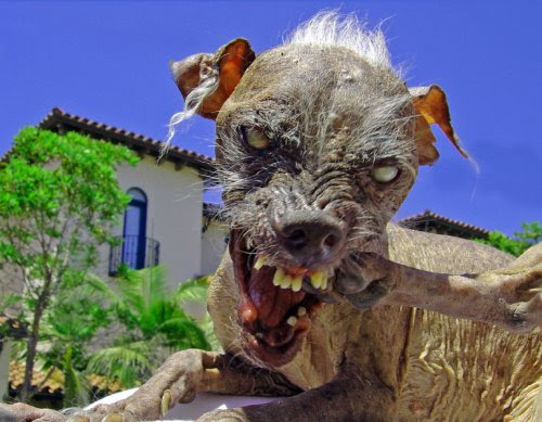 """""""Ugliest Dog In The World."""