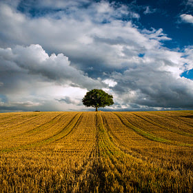 Lonely Tree by Ray Schwartz on 500px.com