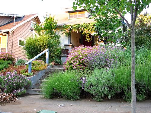 Front Yard Landscaping Ideas - Phoenix Hammer