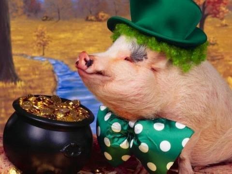 100+ Gambar Lucu Babi Ngepet Terlihat Keren