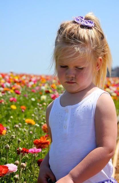 Carlsbad Flower Fields April 2012 13