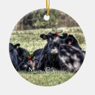 Black Angus Cows Merry Cowmas