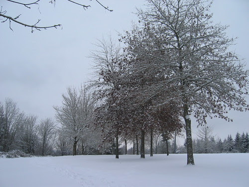 Ridgewood View Park