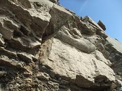 fossil juts