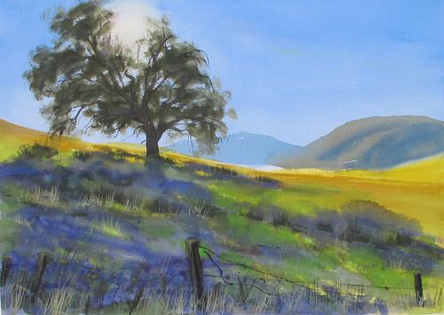 Shadow Oak by Spencer Mackay